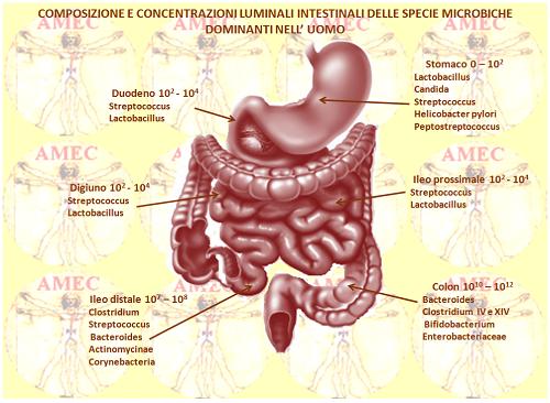 I batteri intestinali alleati della salute