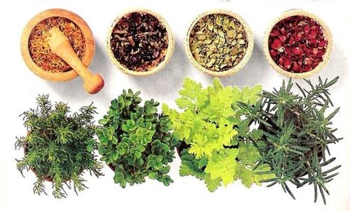 Fitoterapia psicosomatica: un aiuto dalle piante