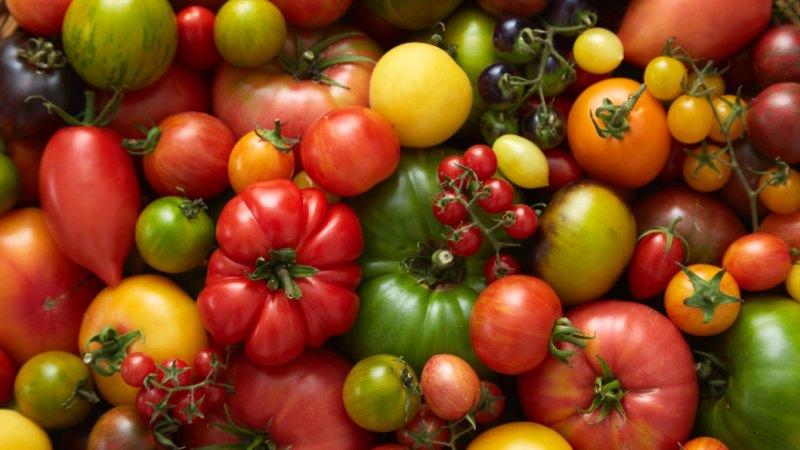 Pomodori, patate e melanzane: fanno bene oppure no?