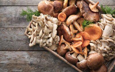 I funghi: non solo una questione di gusto