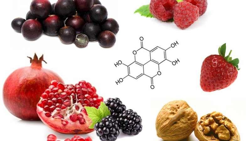 Pillole di immunonutrizione#6: vitamine e sali minerali